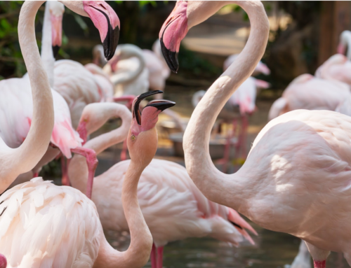 Pink Flamingo Day at New Jersey Six Flags Safari Discoveries
